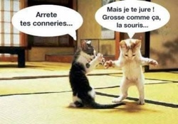 Animaux Imaginaires , chat
