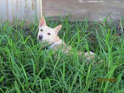 Anna, chien