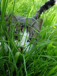 Apollon, chat Gouttière