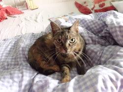 Aprile, chat Gouttière