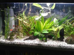 Aquarium, autres