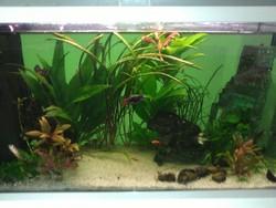 Aquarium Tropical, autres
