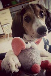 Aria, chien