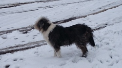 Ariane, chien