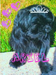 Ariel, chien