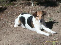 Arielle, chien