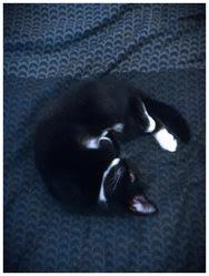 Arielle, chat Gouttière