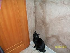 Armony, chat Gouttière
