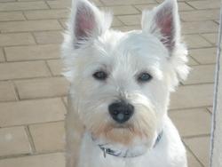 Arnold, chien