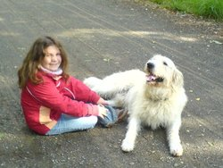 Aron, chien