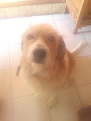 Arria, chien