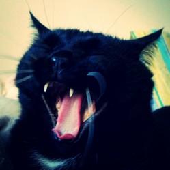 Arsène, chat Européen