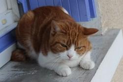 Artémis, chat Gouttière