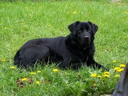 Arthur, chien