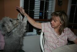 Arthur, chien Fox-Terrier