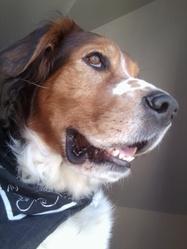 Artus, chien