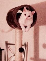 Arwen, chat Gouttière
