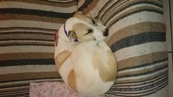 Arwen , chien