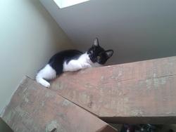 Arya, chat Gouttière