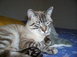 Asasina, chat