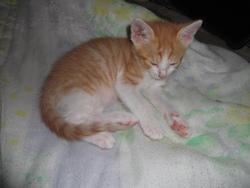Aslan, chat Gouttière