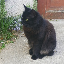 Asmar, chat Gouttière