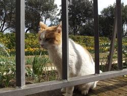 Association Les Chats De Rome, chat