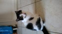 Astrid, chat Gouttière