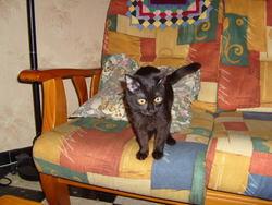 Athéna, chat Gouttière