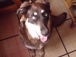 Athéna, chien