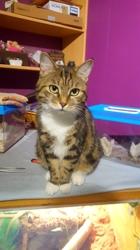 Athèna, chat Gouttière