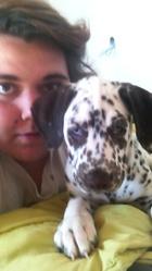 Athos, chien Dalmatien
