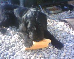 Athos Alias Nounours, chien