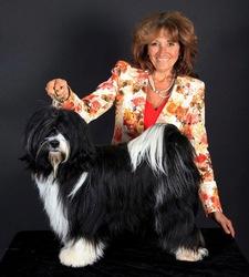 Atisha'S Viva Las Vegas, chien Terrier tibétain