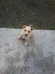 Atlas, chien