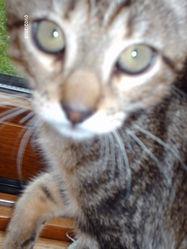 Atshy, chat Gouttière