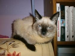 Aura, chat