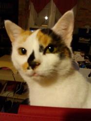 Aurore, chat