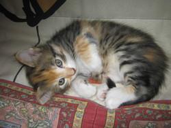 Automne, chat Gouttière