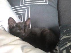 Averell, chat Gouttière