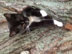 Awowa, chat Gouttière