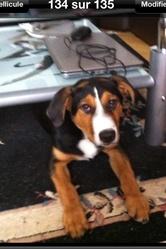 Axel , chien