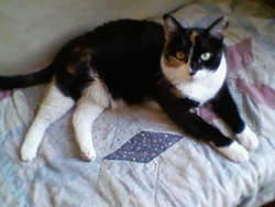 Axelle, chat