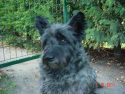 Azie, chien