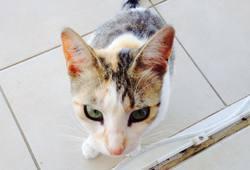 Azura , chat