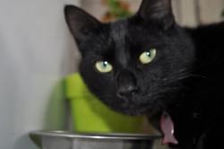 Gaby, chat Gouttière