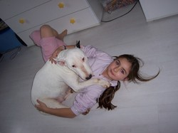 Ourka, chien Bull Terrier