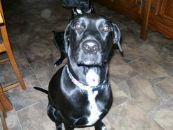 Shanna , chien