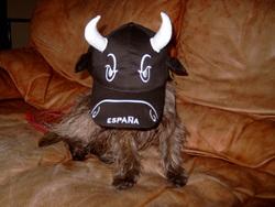 Vidocq, chien Cairn Terrier
