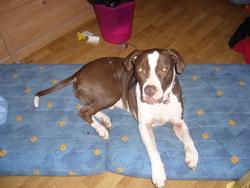 Louka, chien